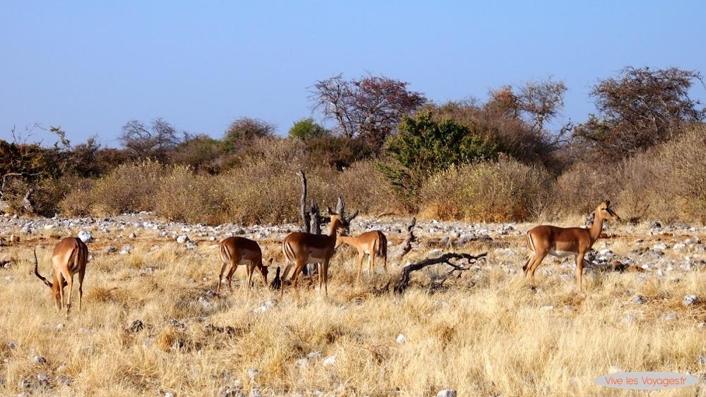 Namibie012