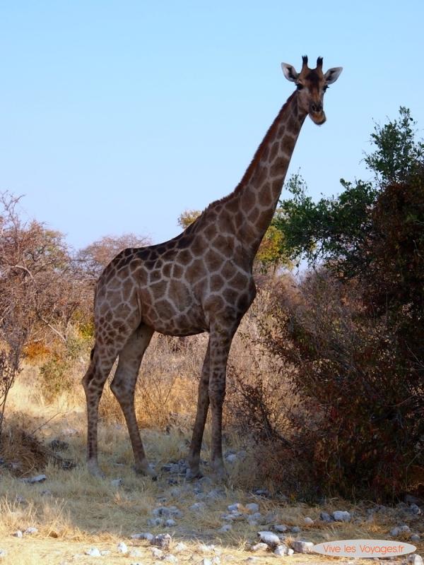 Namibie013
