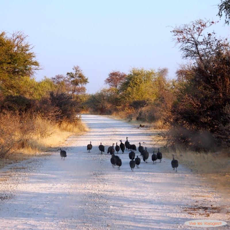 Namibie015