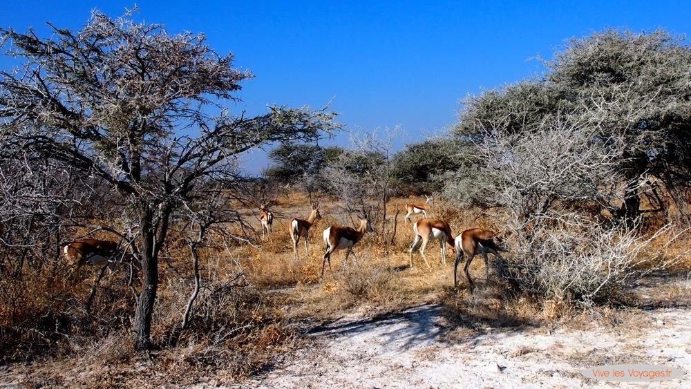 Namibie031
