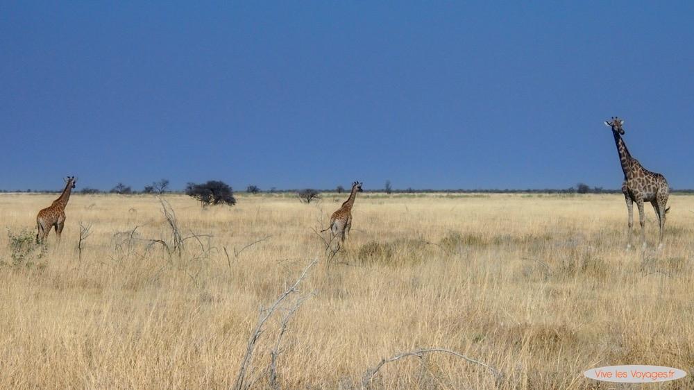 Namibie034