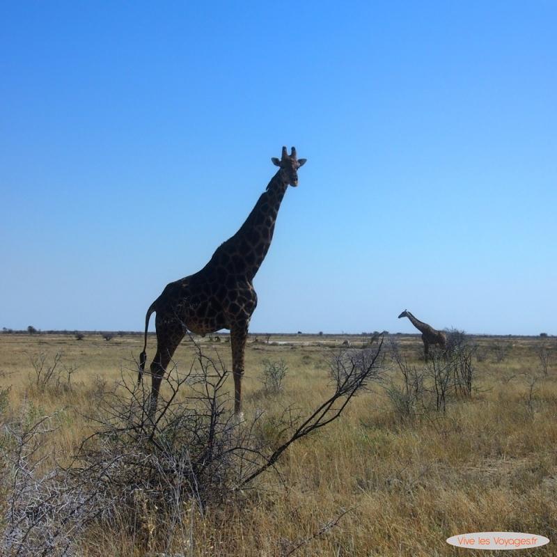 Namibie035