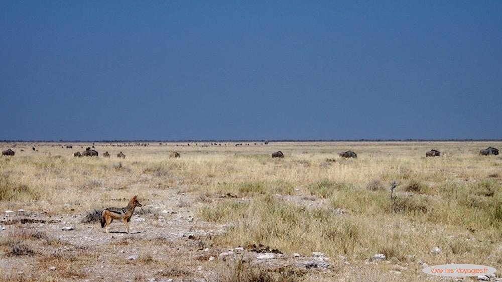 Namibie046