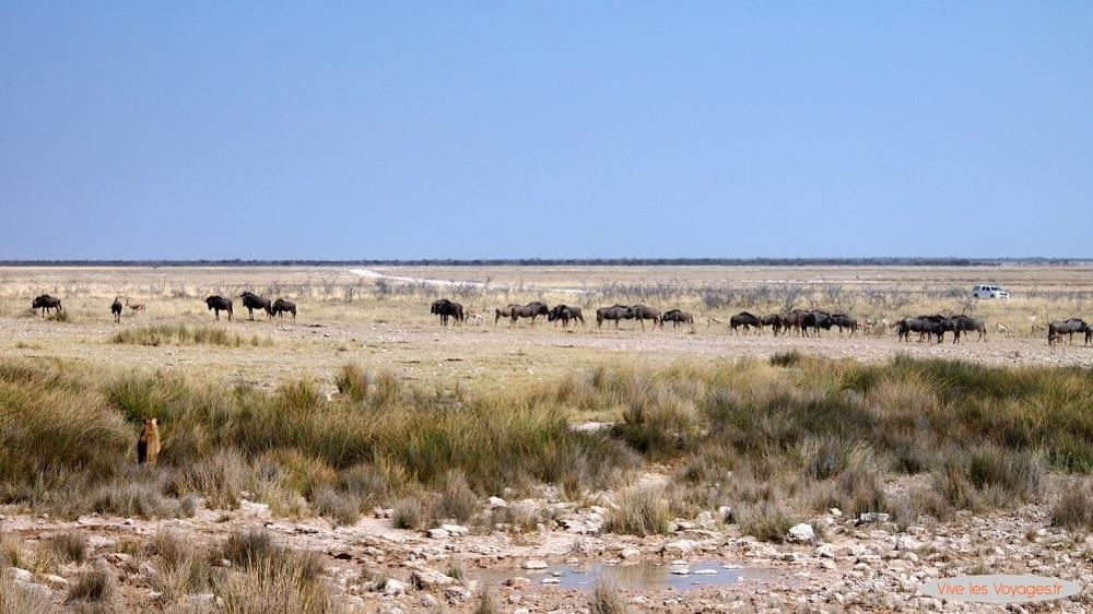 Namibie048