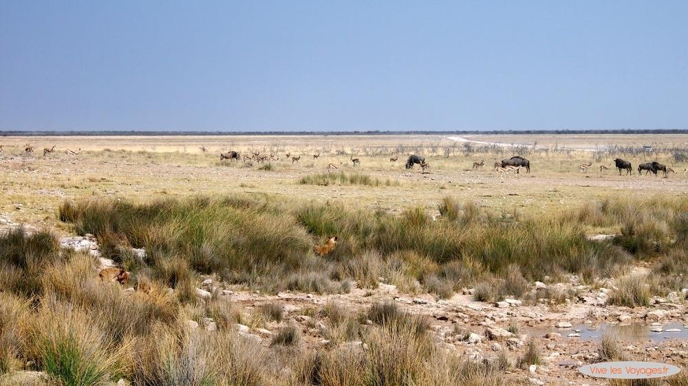Namibie049