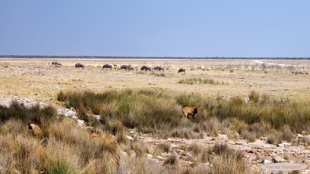 Namibie052