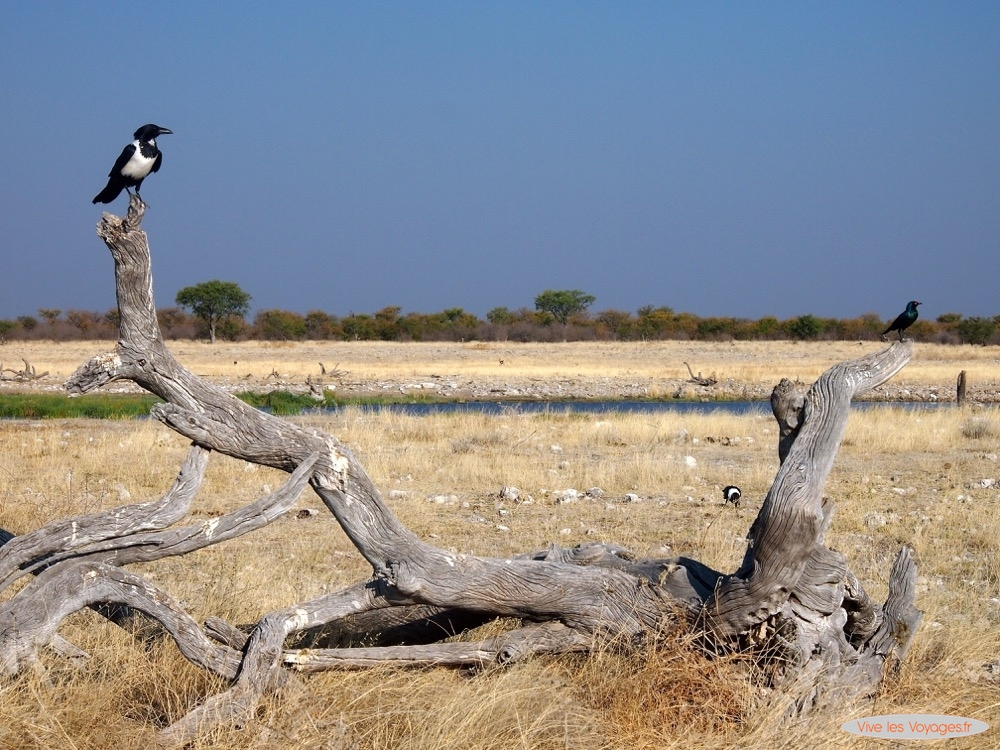 Namibie065