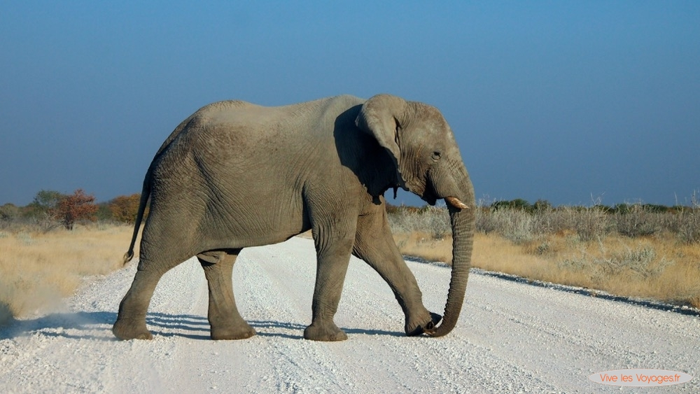 Namibie067