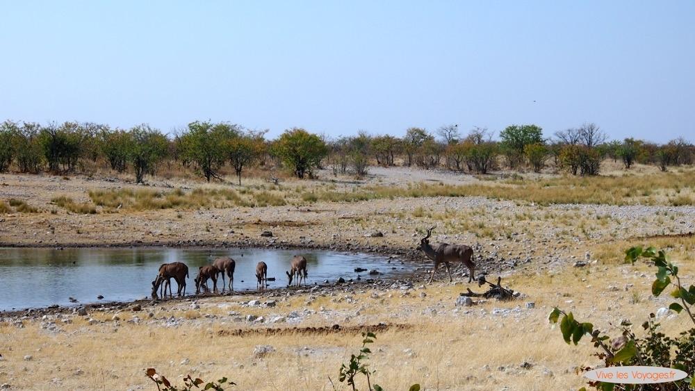 Namibie073