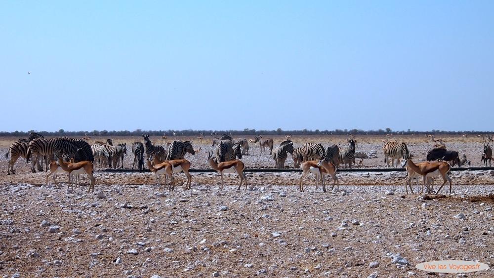 Namibie075