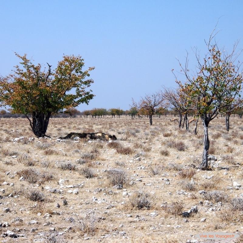 Namibie076