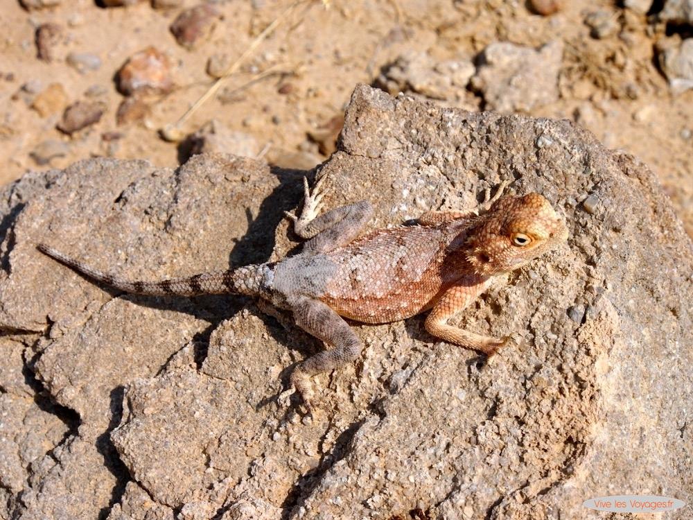 Namibie110