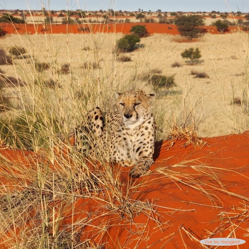 Namibie189