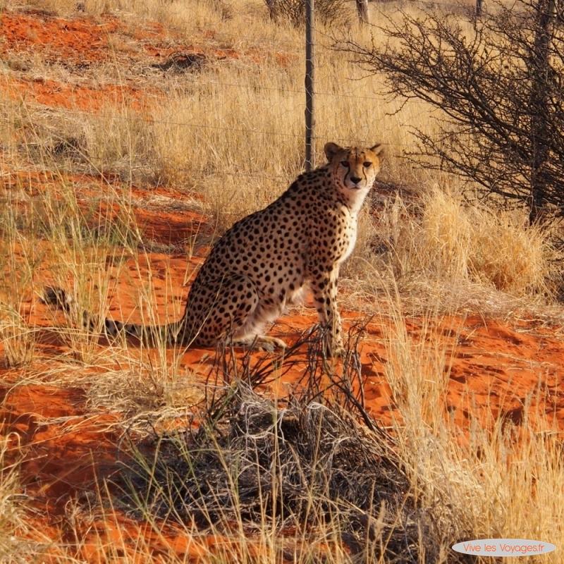 Namibie190