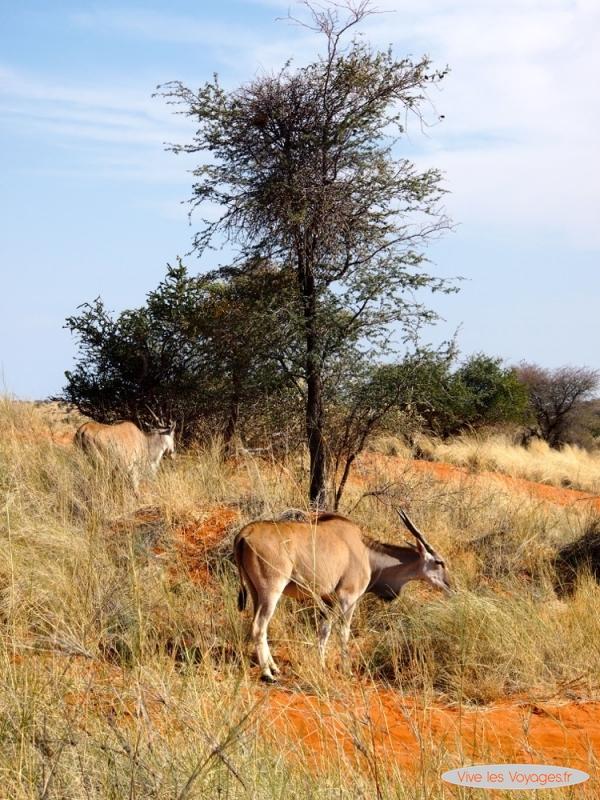 Namibie195