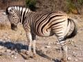 Namibie011