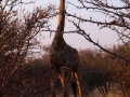 Namibie016