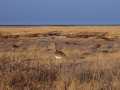 Namibie021