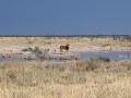 Namibie042