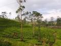 Sri Lanka053