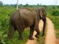 Sri Lanka103