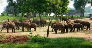 Elephant transit home - Uda Walave