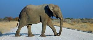 ElephantEtosha