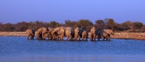 NamibieElephants