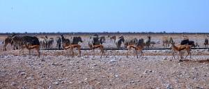 NamibieEtosha